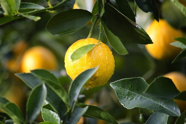 Abnehmen mit Zitronen im eBalance Blog