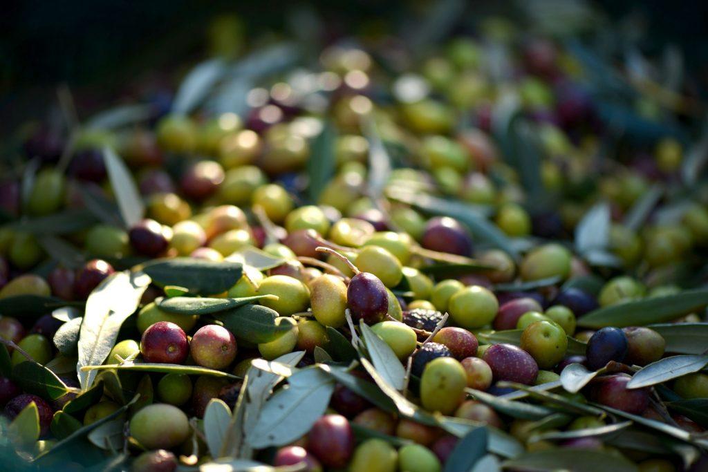 Oliven - die Kleinen, Schönen, Runden und Gesunden - eBalance Blog